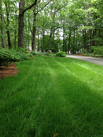 Organic lawn in New London New Hampshire by Complete Land Organics
