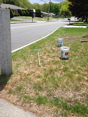 Repair winter lawn damage organically