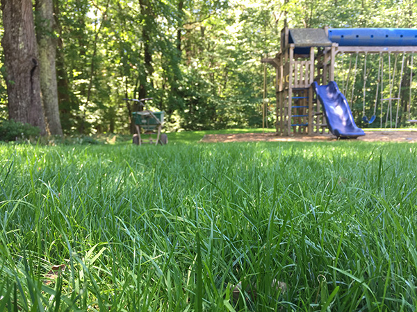 Chemical free organic lawn in Sunapee NH