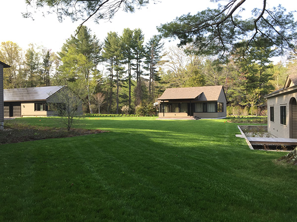 Drought tolerant organic lawn in New London NH