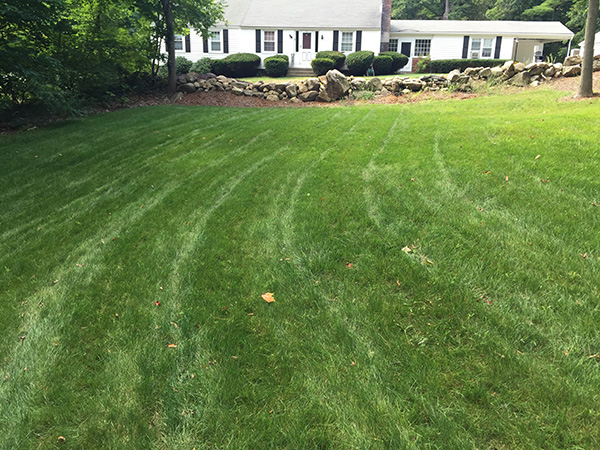 Lush green lawn in Grantham NH managed organically without he use of chemicals