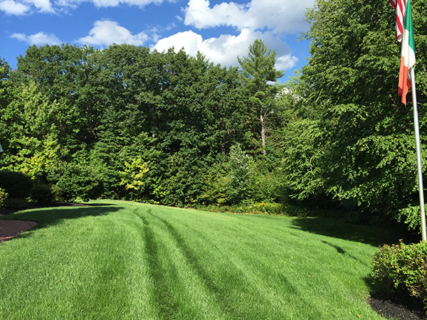 Organic lawn in Enfield NH