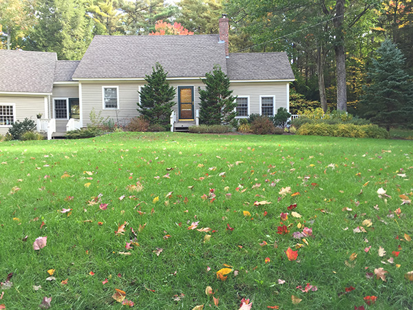 Organic lawn prepared for winter in Wilmot NH
