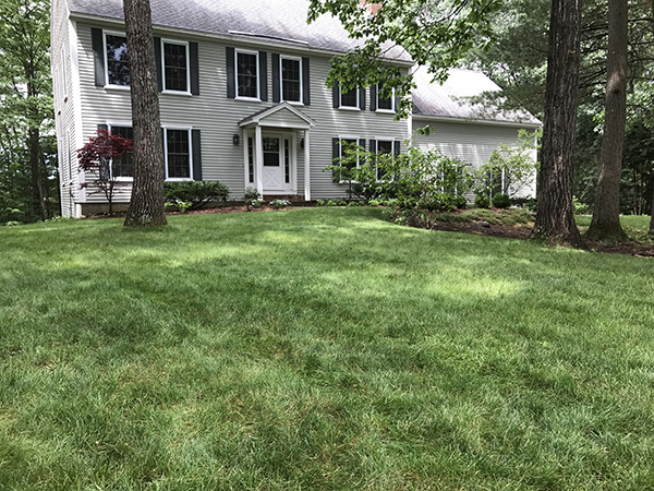 Organic lawn services delivered in Newbury New Hampshire