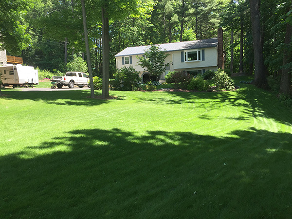 This is how you create an organic lawn in New Hampshire