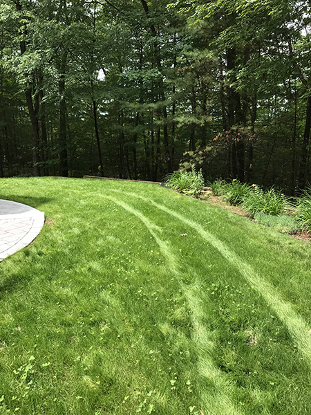 Andover NH organic lawn in the Complete Land Organics gallery