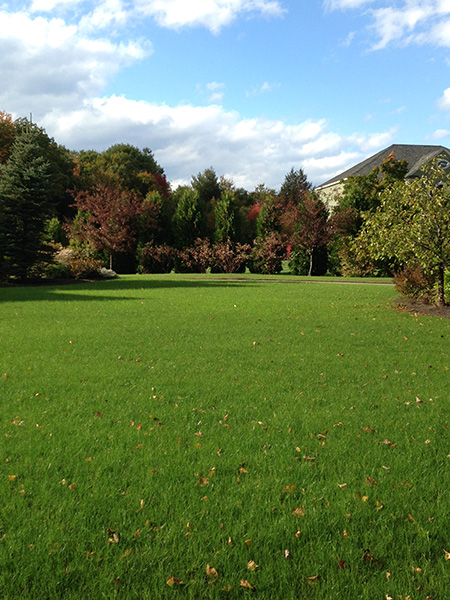 Clear blue sky over an organic lawn in Bradford NH