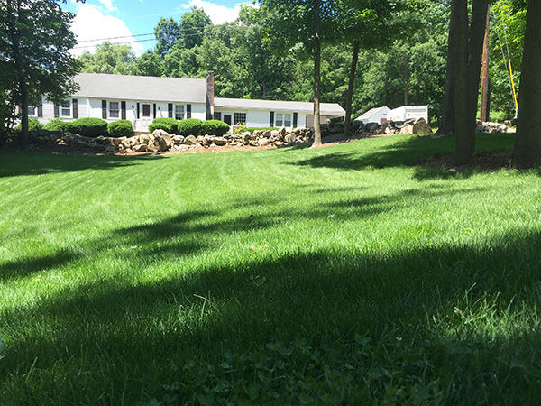 Lush lawn managed by Complete Land Organics in New London NH