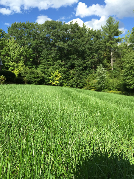 Organic landscaping services for a property in Springfield New Hampshire