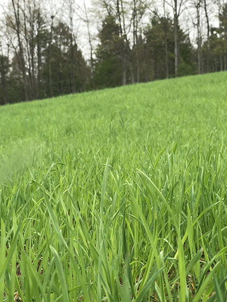Organic lawns work in New Hampshire